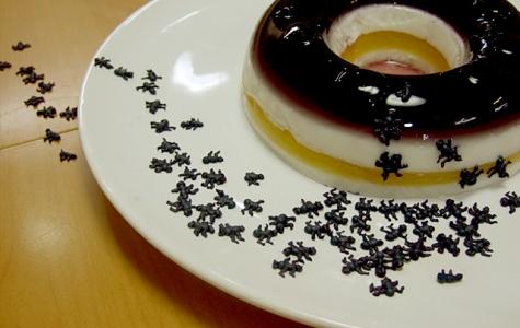 Karınca şeker
