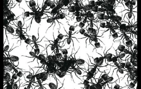 HD Karıncalar