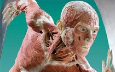 Body Worlds – insan kadavraları- sergisi İstanbul'da!