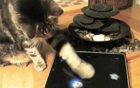 Friskies, kediler için iPad oyunları işine girdi…