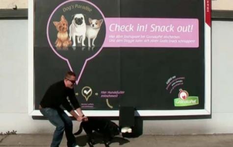 Foursquare'de check-in yapana ücretsiz köpek maması