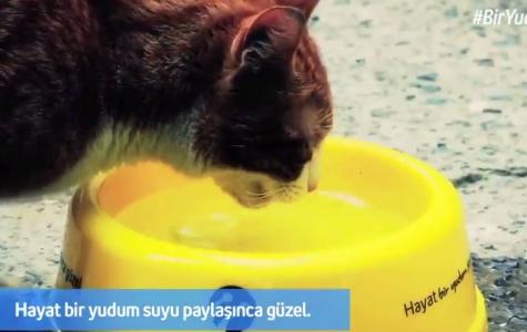 Turkcell'den Sokak Hayvanları İçin #BirYudumSu