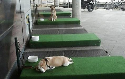 IKEA Almanya'dan Köpekler İçin Özel Konaklama Yeri