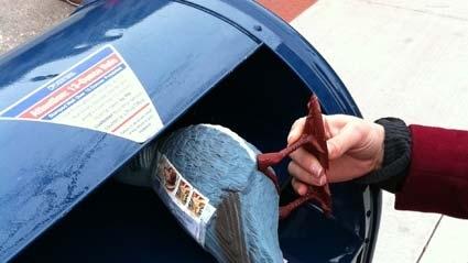 10 Dolara Güvercinle Mektup Göndermek