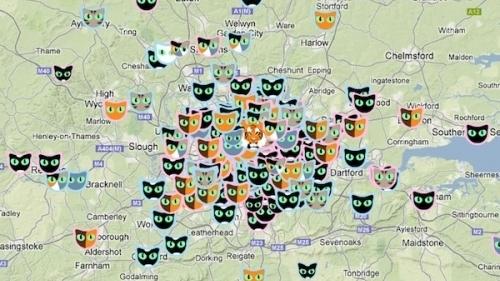 Londra Kedi Haritası