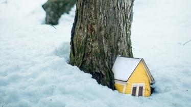 Ormanda Minyatür Hayatlar