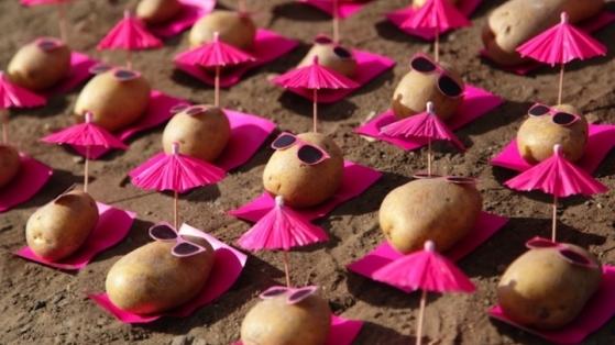 Patates Sanatı