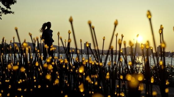 Boston Göl Kıyısında Koşanlara Özel Dijital Işık Ormanı