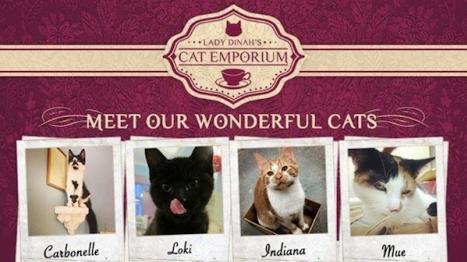 Müşterisi Yalnızca Kediler Olan Kafe Londra'da Açılıyor