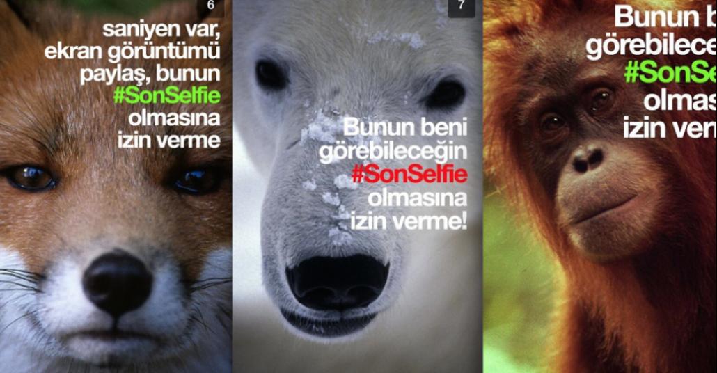 WWF Türkiye'den Snapchat'te #SonSelfie