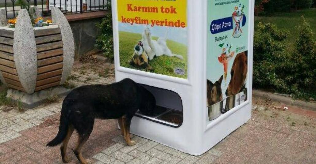 Sokak Hayvanlarını Düşünen Geri Dönüşüm Atık Kutuları