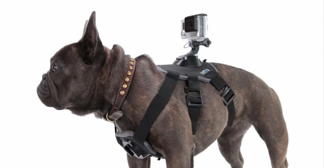 Köpeklere Aksiyon Kamerası Takma Aparatı: Fetch