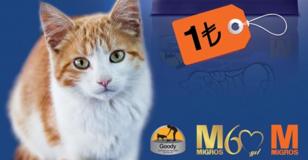 Sokak Kedileri İçin 1 Liralık Mamalar