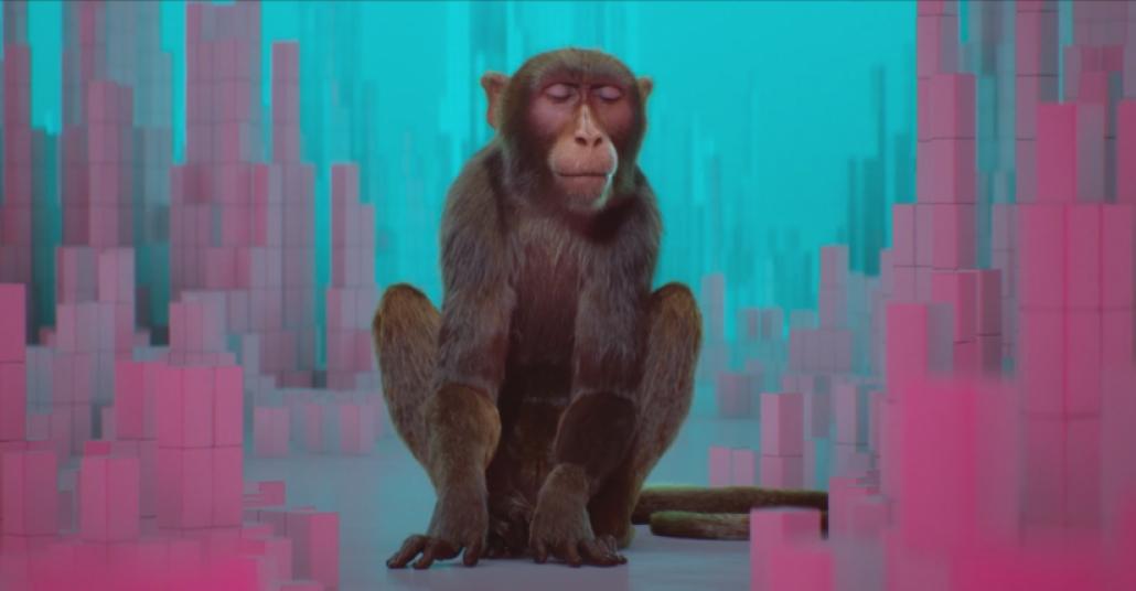 Dijital Maymunun Renkleri Duyup Müziği Görme Hikayesi