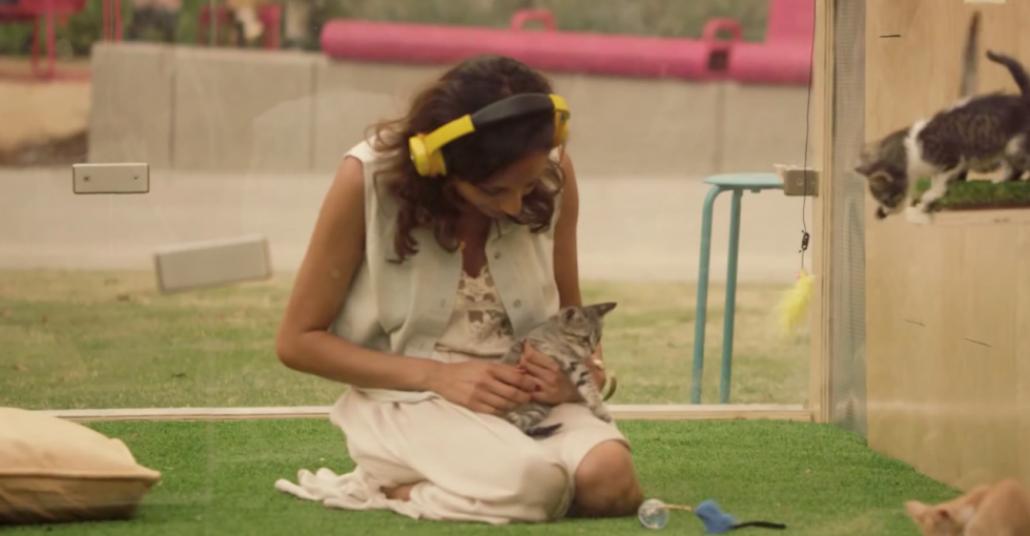 Kedi Yavrularıyla Terapi Seansı