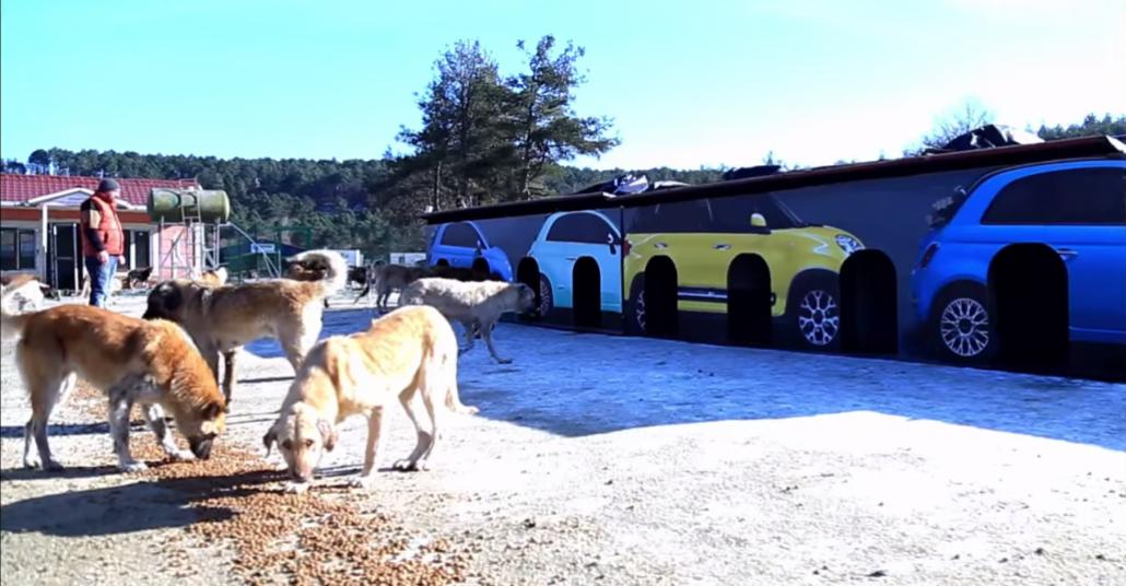Fiat'ın Eski Açıkhava Baskıları Barınaklarda Hayvanlara Ev oluyor