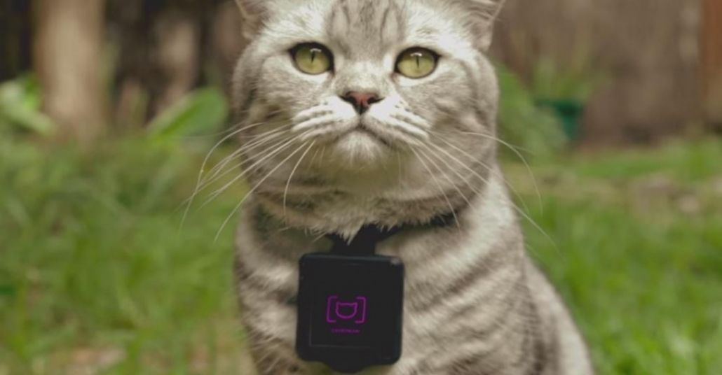Instagram Hesabını Kendi Yöneten Kediler