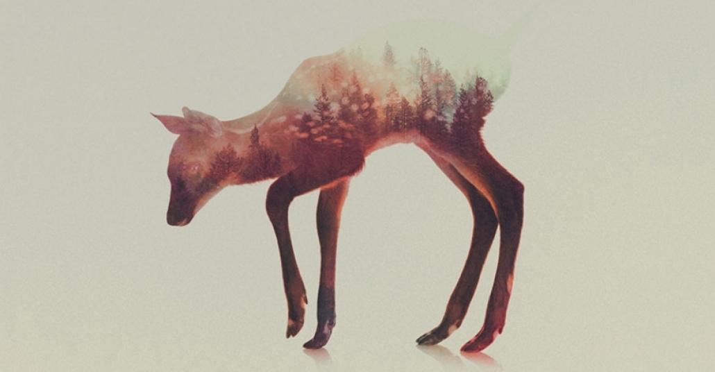 Yaşadığı Doğayla Bir Bütün Haline Gelmiş Hayvanlar