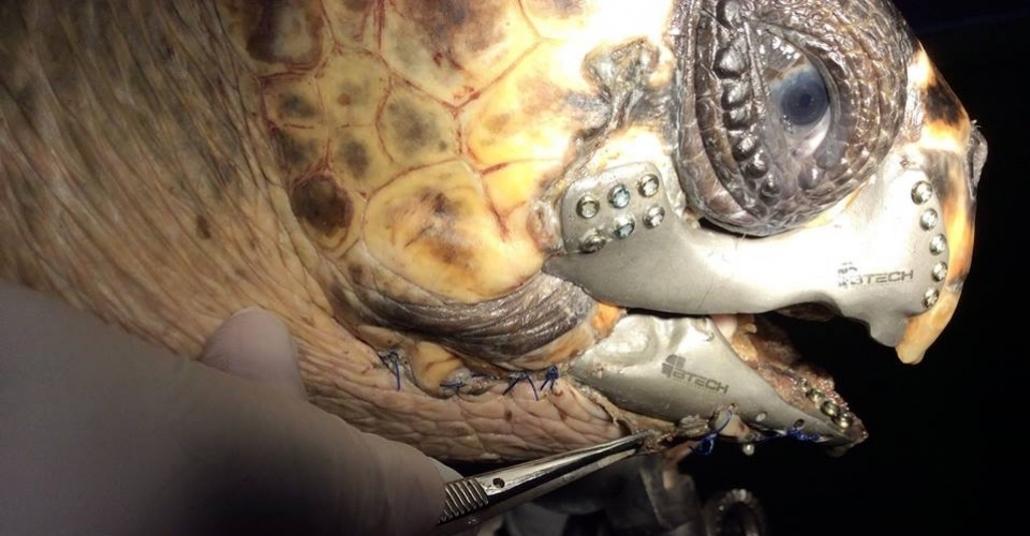 3B Baskı Çene Proteziyle Yaşama Tutunan Deniz Kaplumbağası