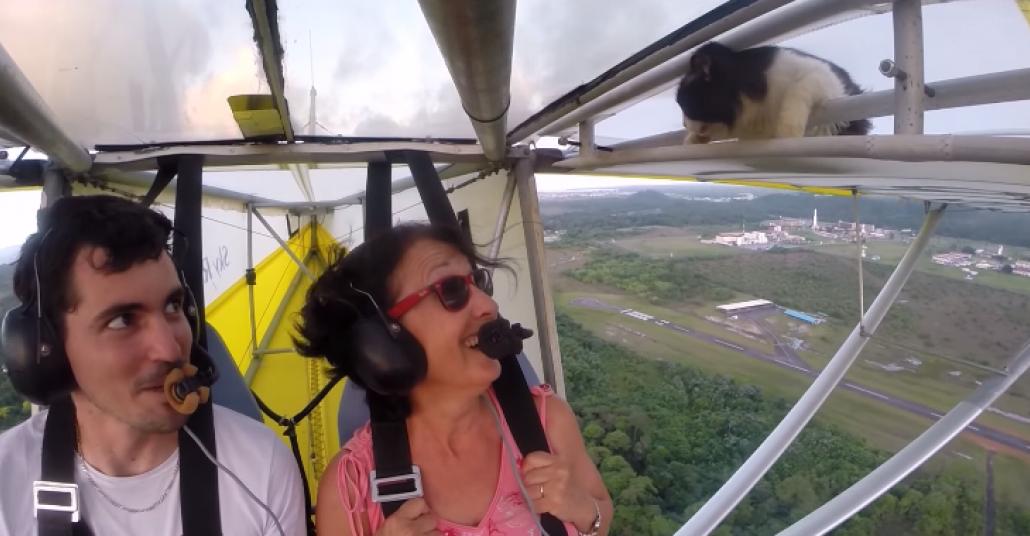 Uçuş Halindeyken Kanatta Beliren Kedi