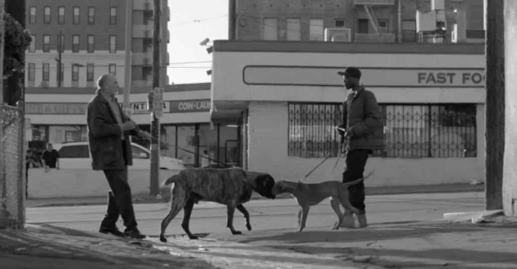 Irkçılık Nedir Bilmeyen Köpekler: İyiliği Besleyin