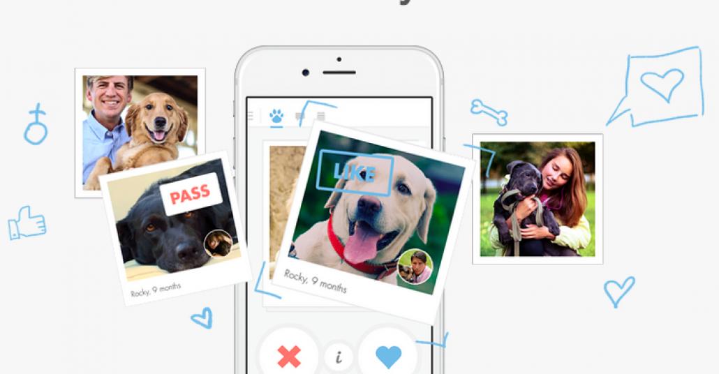 Köpeğinize Arkadaş Bulan Uygulama: Tindog