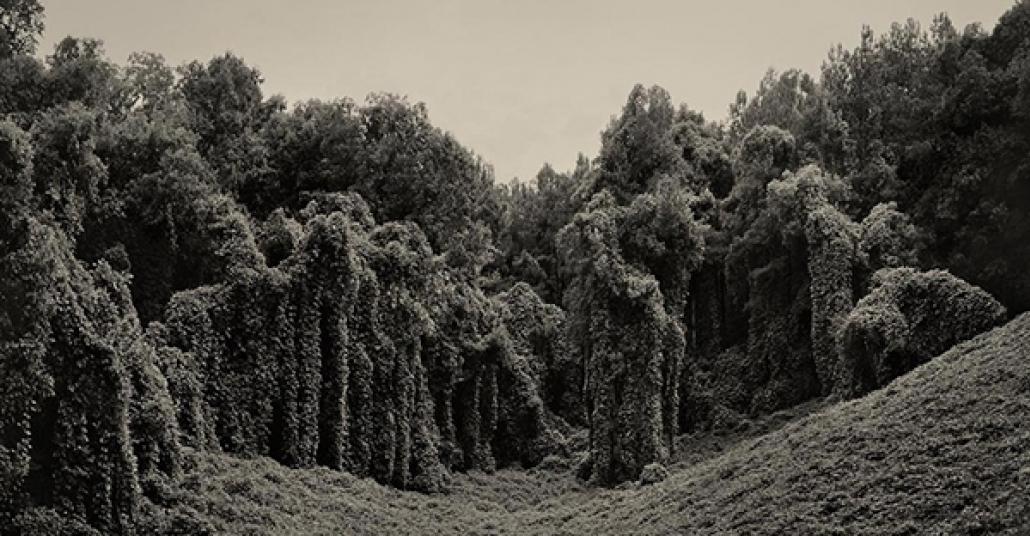 Orman Katili Kudzu Sarmaşığının Tekinsiz Fotoğrafları