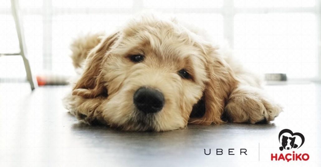 Yarın Ofisinizi Uber'le Yavru Köpekler Ziyaret Edebilir