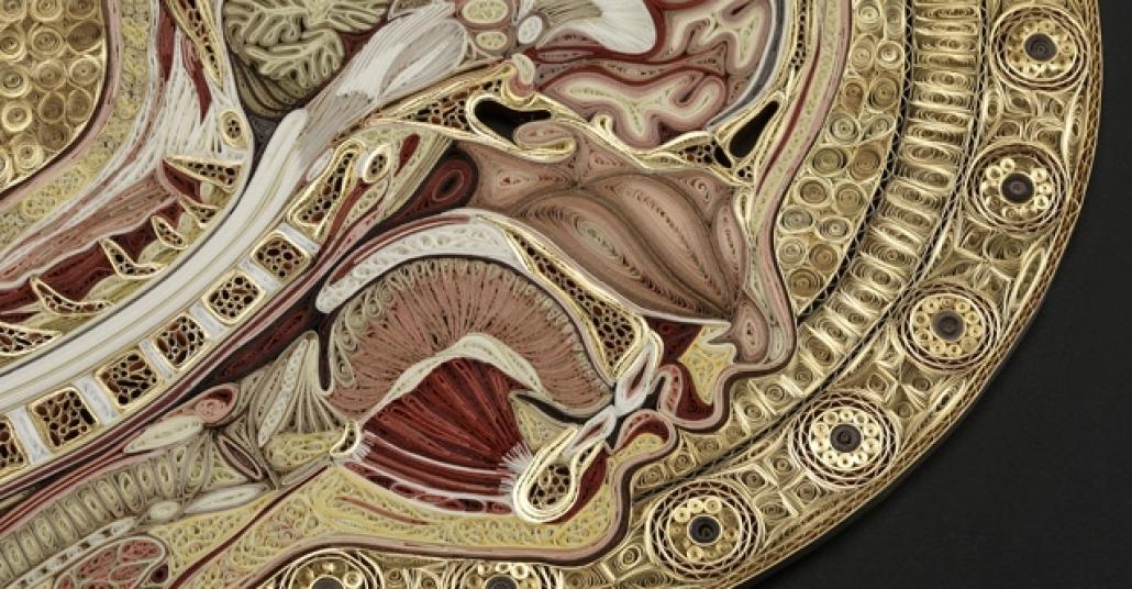 Kağıtların Kıvrılmasıyla Doğan Detaylı Anatomi Figürleri