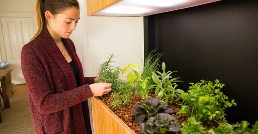 Evde Doğal Sebze Yetiştirme Ekosistemi
