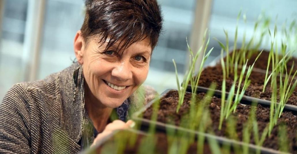 Kurumuş Bitkileri Hayata Döndürecek Bilim Çalışması
