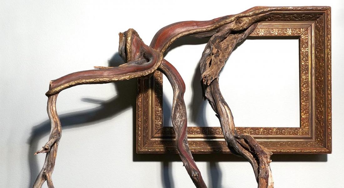 Ağaç Dallarının Sarıp Sarmaladığı Eski Çerçeveler