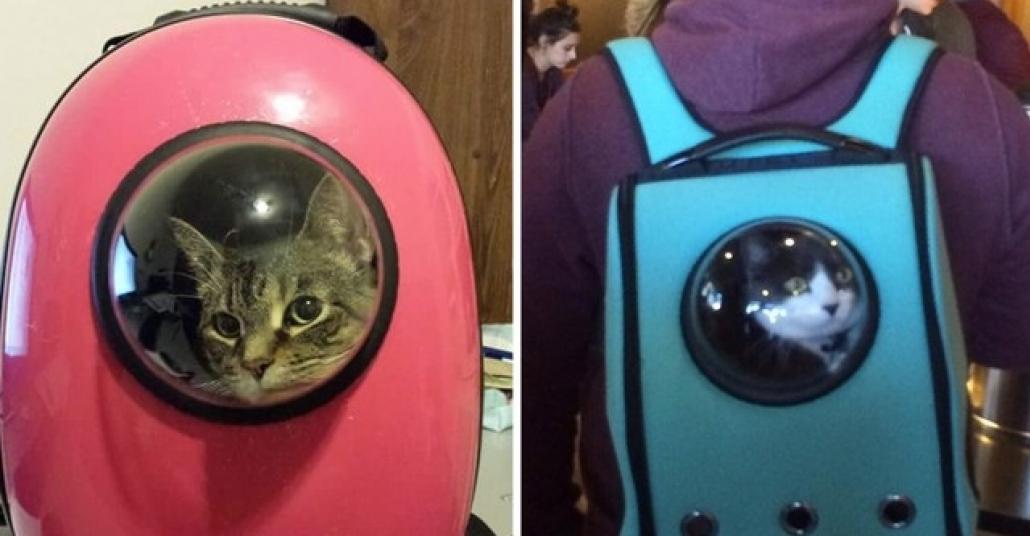Çekilin, Astronot Kediler Geliyor!