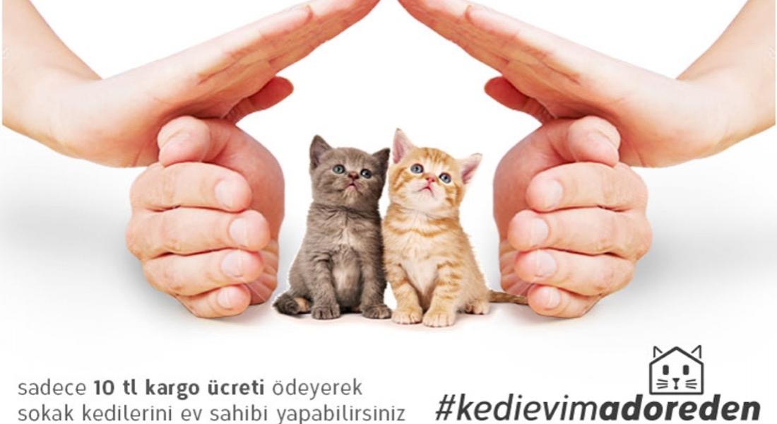 Hasarlı Mobilyalardan 10 Liraya Kedi Evi