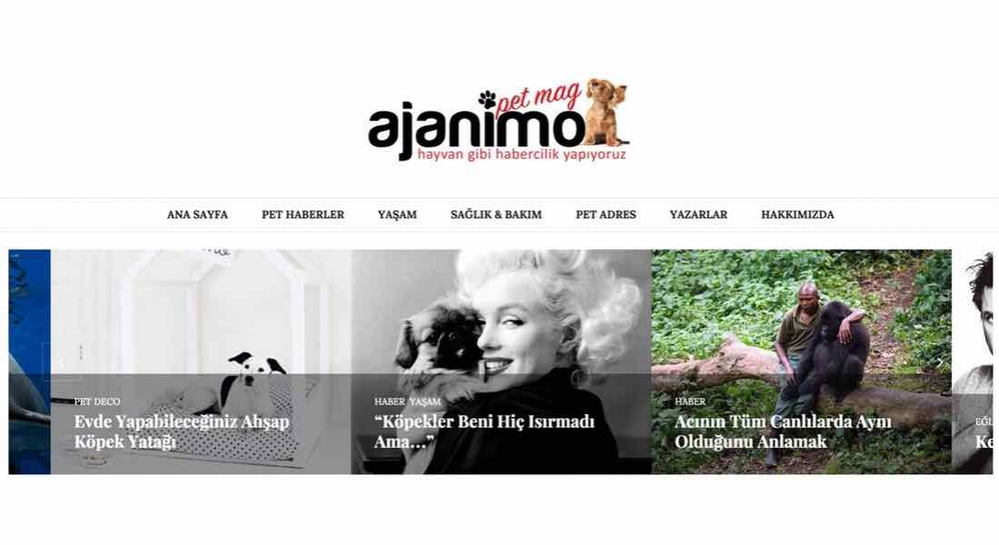 Bir Köpeğin Yayın Yönetmenliğinde Hayvan Gibi Haber Sitesi