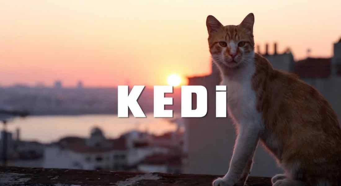 İstanbul'un Kedileri