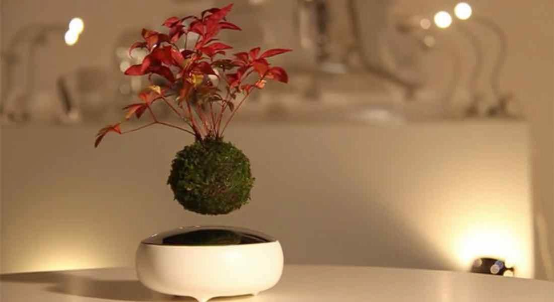 Havada Süzülen Bonsai
