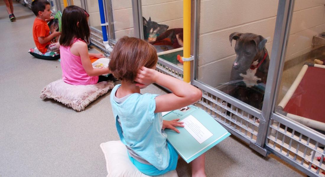 Barınaktaki Köpeklere Kitap Okuyan Çocuklar