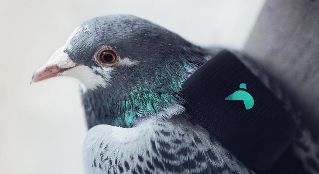 Londra'nın Hava Kalite Verisini Toplayan Güvercinler