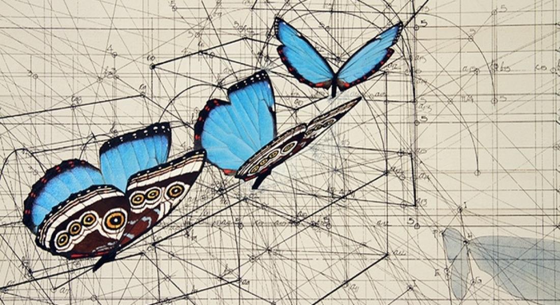 Doğada Saklı Olan Matematiksel Güzelliği Açığa Çıkaran Boyama Kitabı
