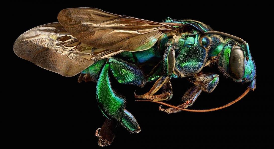 Microsculpture: Mikro Böceklerin Makro Fotoğrafları