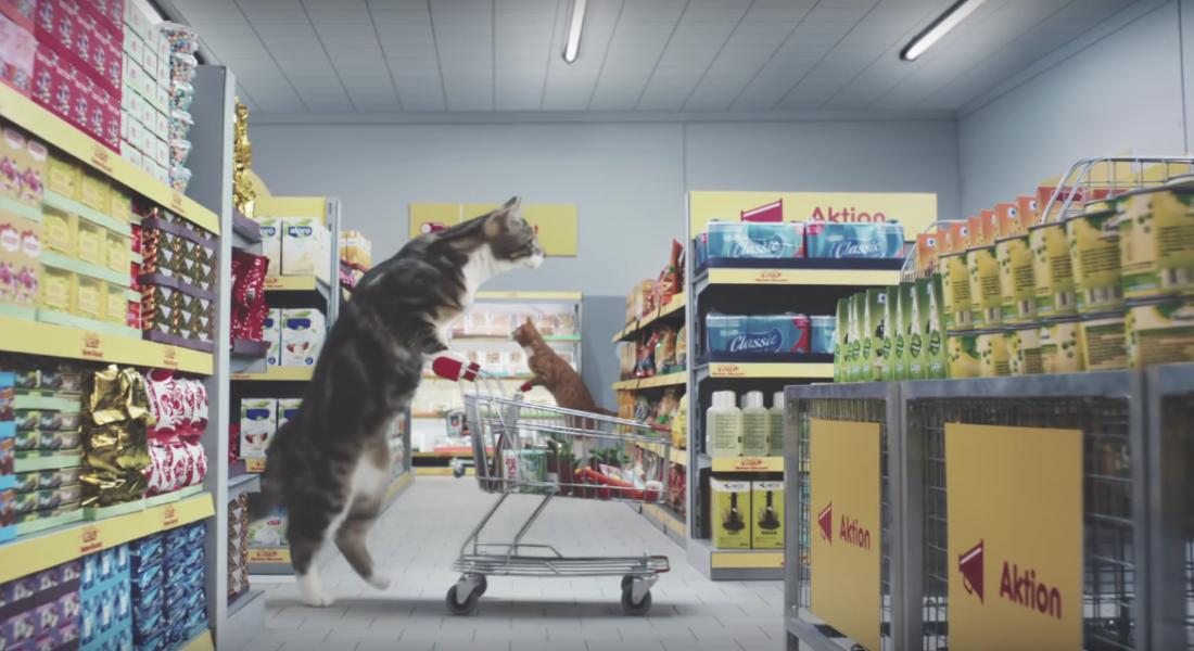 Kediler Süpermarket Alışverişinde