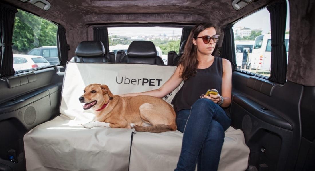 Uber'dan Hayvanseverlere Zeytin Dalı: UberPET