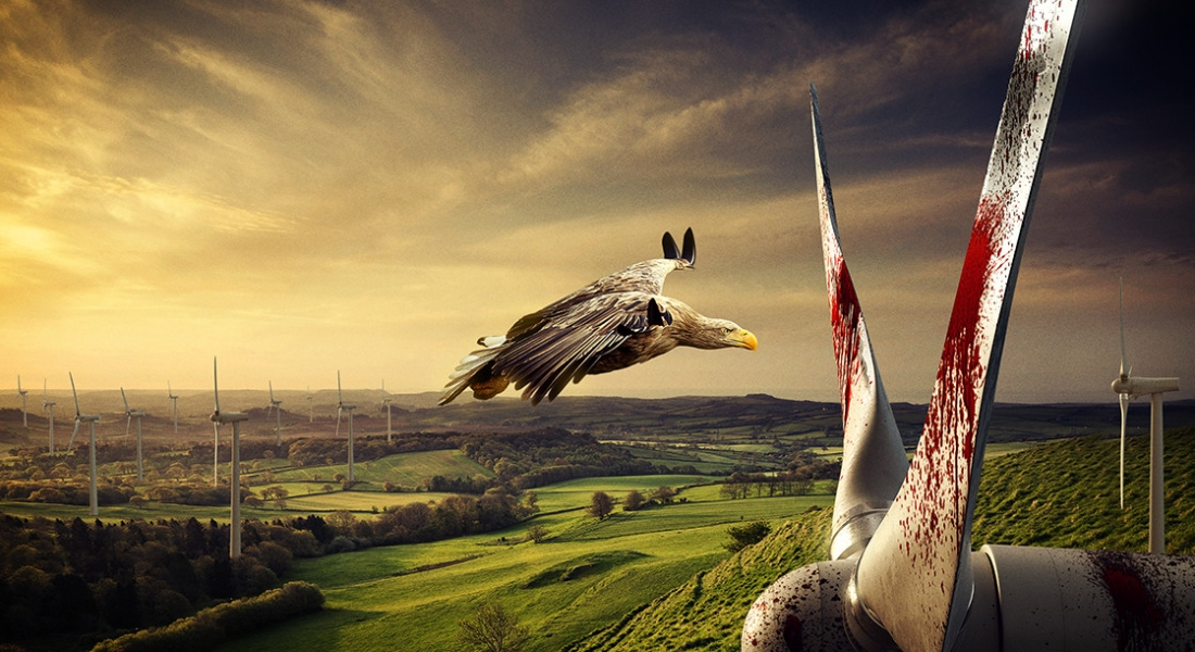 Twitter Hesabınızı Nesli Tükenen Kuşlara Bağışlayın