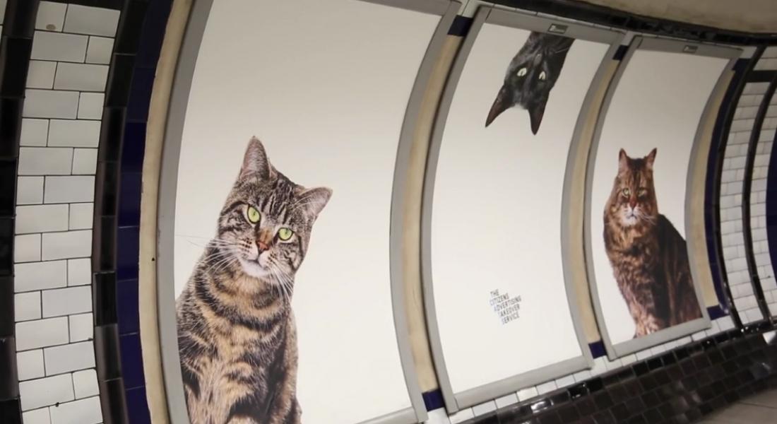 Londra Metrosu'ndaki Reklam Panoları Kedi Fotoğraflarıyla Kaplandı