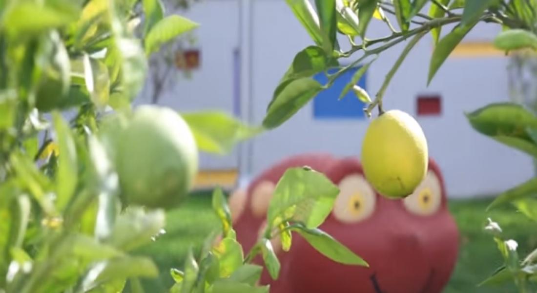 Türkiye'nin İlk Ekolojik Çocuk Yuvası Kadıköy'de Açıldı!