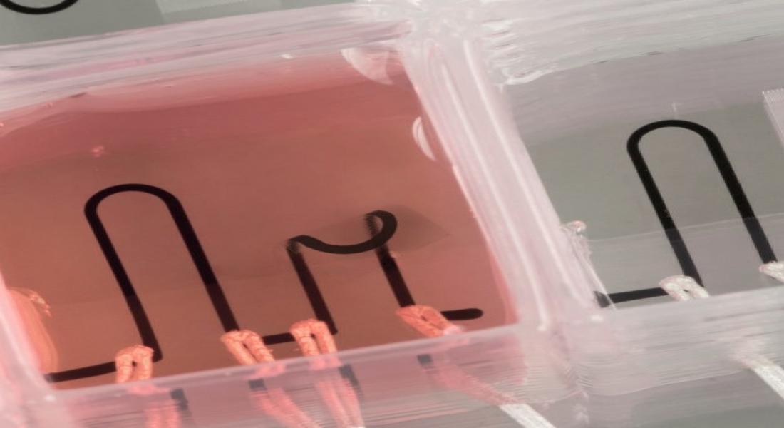 3B Baskıyla Üretilmiş Kalp İşlevi Gören Çip Hayvan Deneylerini Bitirebilir