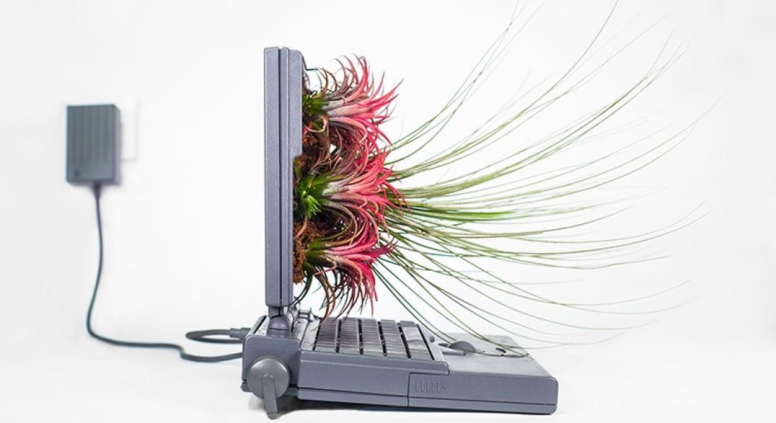 Apple Bilgisayarları Saksıya Dönüştüren Proje: Plant Your Mac
