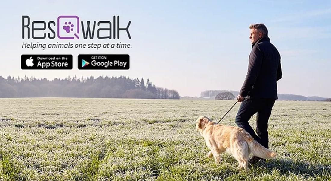 ResQwalk ile Yürüyüş Yaparak Sokak Hayvanları için Fon Yaratın