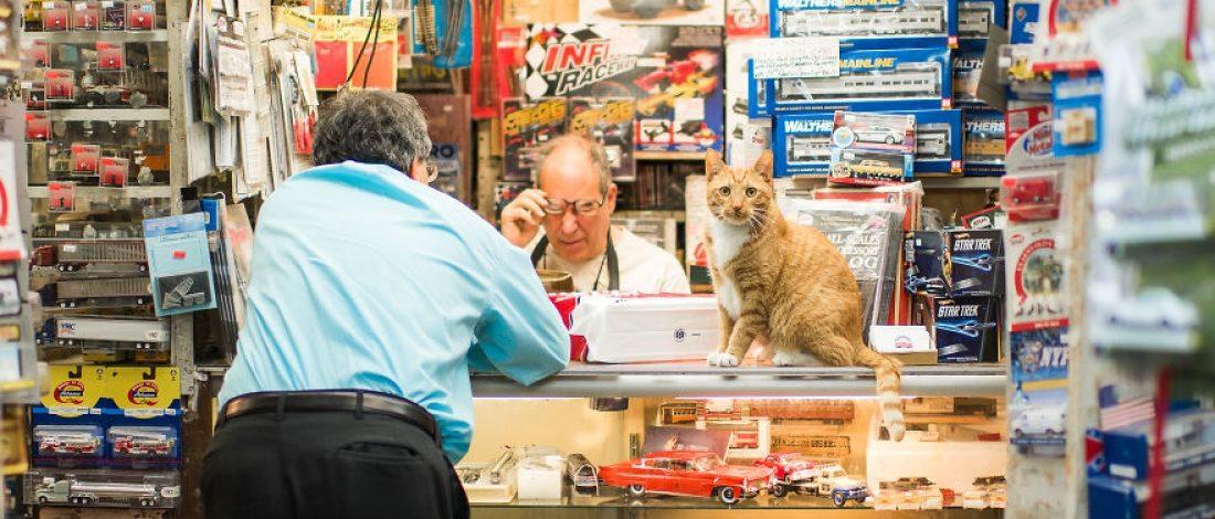New York Esnafının Kedileri